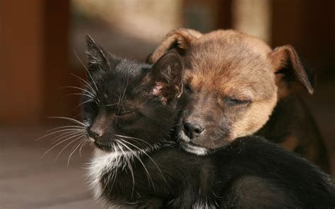 The 10 Biggest Myths About Cats and Dogs Debunked