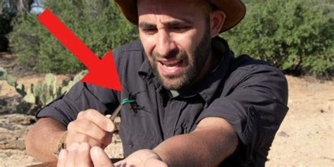 Why Coyote Peterson stings himself on YouTube - Business