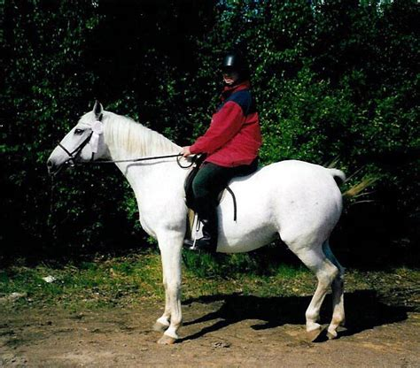 In our memory - lipizzanersweden